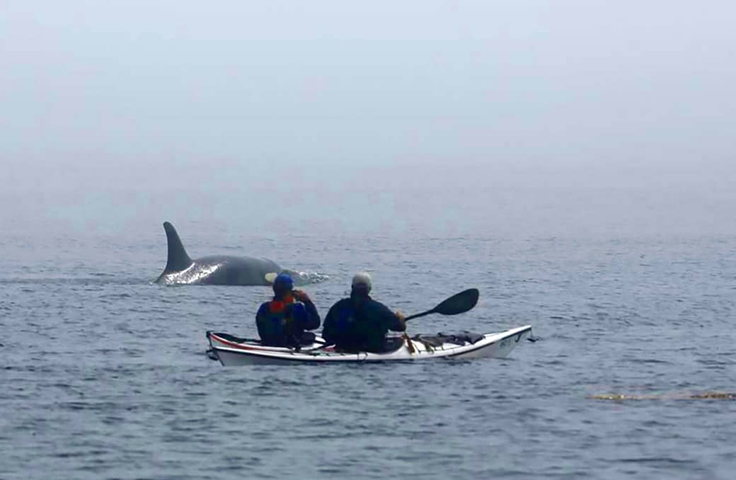 5-Day Sea Kayak Expedition Departing from Anacortes