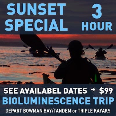 Sunset Special Bioluminescence Trips